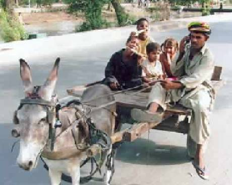 Donkey Cart Driver on his Cell Mobile Phone